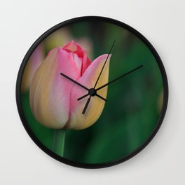 Soft Pastel Colors Tulips at Lake Maggiore in Italy Wall Clock