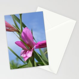 Pink Flowers - Field Gladiolus Stationery Cards
