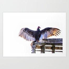 Turkey Buzzard Art Print