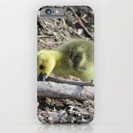 Goslings eating by the Shoreline iPhone Case