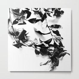 Bay leaves 4 Metal Print