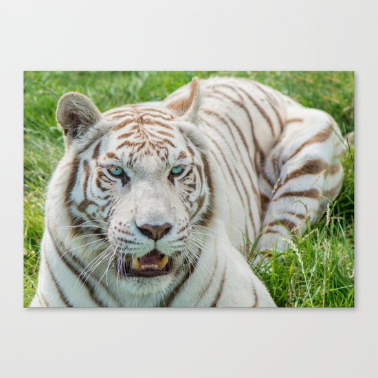 THE BEAUTY OF WHITE TIGERS Canvas Print