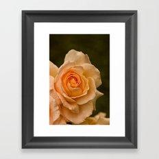 Dew Kissed Rose Floral Framed Art Print
