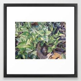 Green and White Hosta Framed Art Print