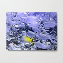 Bigeye and Yellowtail Snapper Metal Print