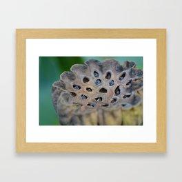 seed pod Framed Art Print