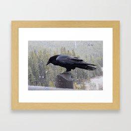 Raven of Yellowstone Framed Art Print