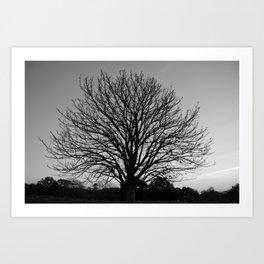 richmond park- b-w Art Print
