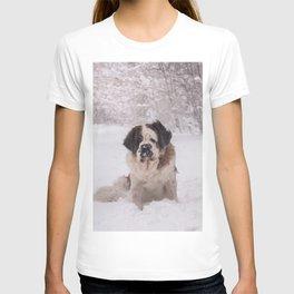 St Bernard dog on the snow T-shirt