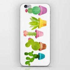 Cactus Plants In Pretty Pots iPhone & iPod Skin