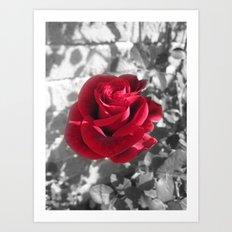 Lovers Rose Art Print
