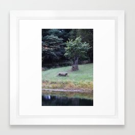 Bench by the Pond Framed Art Print