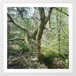 Forest braches Art Print
