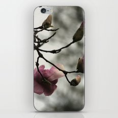 Pale pink blooms iPhone & iPod Skin