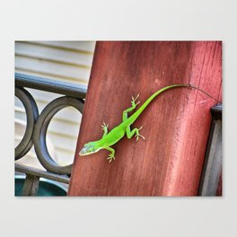 Green Anole Canvas Print