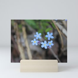 Five Forget-Me-Nots Mini Art Print