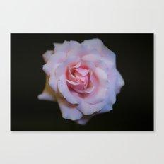 Rose_1 Canvas Print