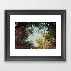 forest 015 Framed Art Print
