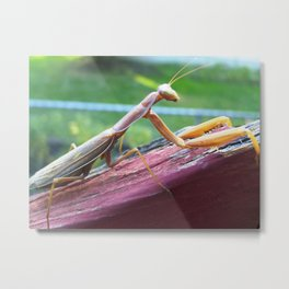 Bug picture Metal Print
