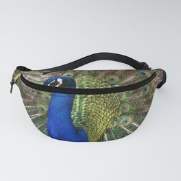 A Peacock Displays its Finery Fanny Pack