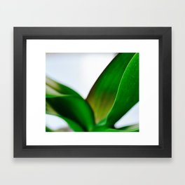 Orchid leaves Framed Art Print
