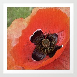 Poppy flower - picture perfect Art Print