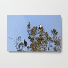 African Fish Eagles Perching on Tree Metal Print