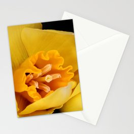 Daffodil or Spring Narcissus Stationery Cards