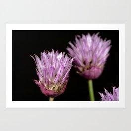 Purple clove flowers Art Print