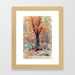 Old New Oak at Autumn Framed Art Print