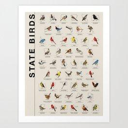 50 State Birds Art Print