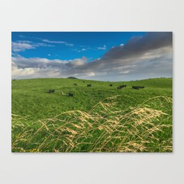 Hawaiian Cows Canvas Print