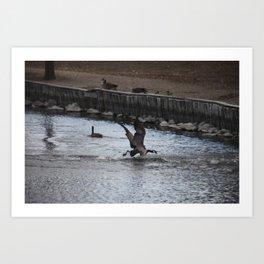 Canadian Goose Departure Art Print
