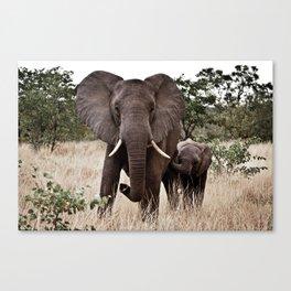 Elephant & Calf Canvas Print