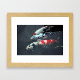 Swimming Koi Framed Art Print