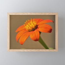 Orange Flower Delight by Reay of Light Framed Mini Art Print
