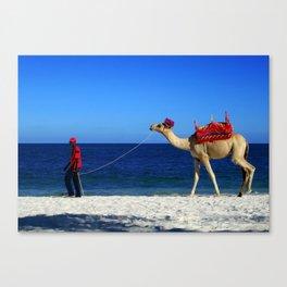 Camel Beach Canvas Print
