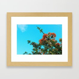 Blooming Orange Framed Art Print