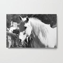 White Horse-B&W Metal Print