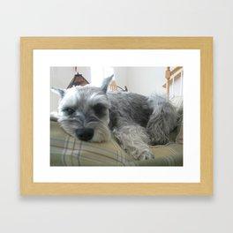 Sweet Grady Framed Art Print