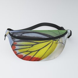 Asian Painted Jezebel butterfly Fanny Pack