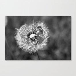 Dandelion & Autumn Canvas Print