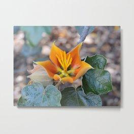 Fremontodendron Blossom Metal Print