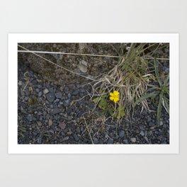 The Little Yellow Icelandic Flower Art Print
