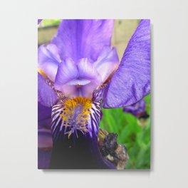 Iris Metal Print