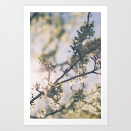 Blooming Blossom, Bring Me Spring! Art Print