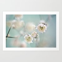 Romantic White Dreamflowers on pastell aqua background Art Print