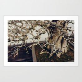 Pomegranate Bonsai Branches Art Print