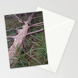 Fallen Pine Tree at Ludington State Park, Michigan Stationery Cards