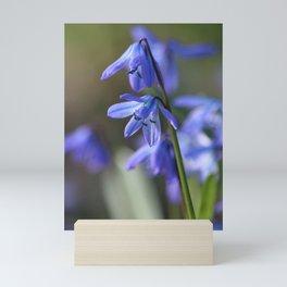 Blue Scilla siberica ,Wood Squill, Flowers Mini Art Print